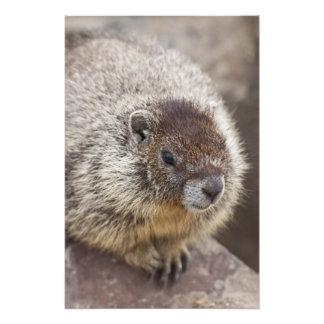 A marmota em Palouse cai parque estadual Impressão De Foto
