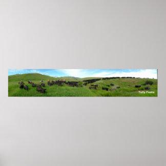A movimentação do gado impressão