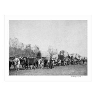 A mulher com trem do boi guardara uma fotografia cartões postais