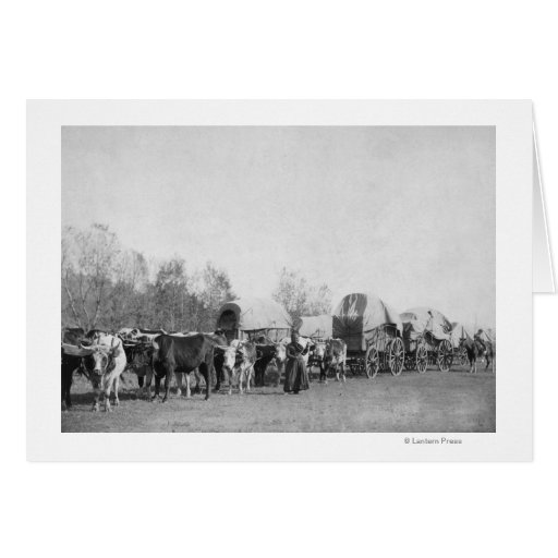 A mulher com trem do boi guardara uma fotografia d cartões