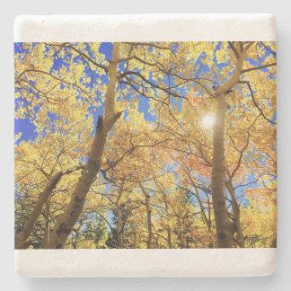 A natureza da queda da árvore ajardina destinos do porta copos de pedra