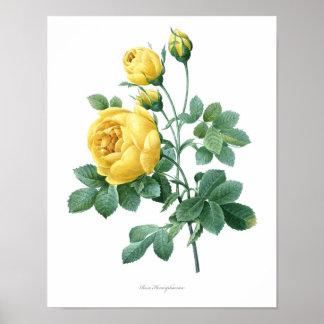 A natureza, impressão botânico, poster da arte da