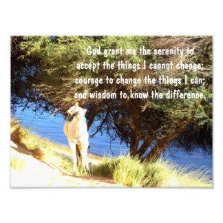 A oração da serenidade impressão de foto