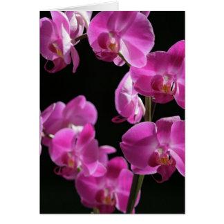 A orquídea floresce cartão