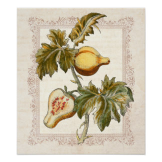 A pera frutificou decoração da cozinha do país do  pôsteres