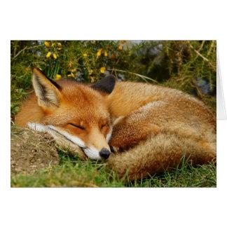 A raposa do sono obtem o cartão bom