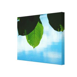 A serenidade da folha impressão em canvas