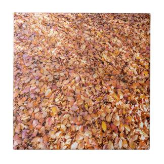 A terra coberta com a árvore de faia sae no outono