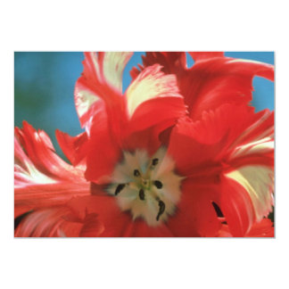 "A tulipa branca do papagaio, ""Estrella Rijnveld"" Convite 12.7 X 17.78cm"