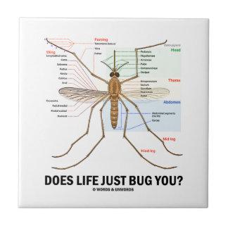 A vida apenas desinseta-o? (Anatomia do mosquito)