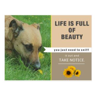 A vida é bonita - cartão