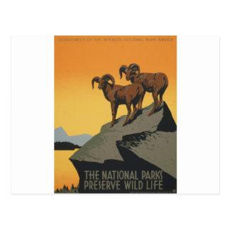 A vida selvagem da conserva dos parques nacionais cartão postal