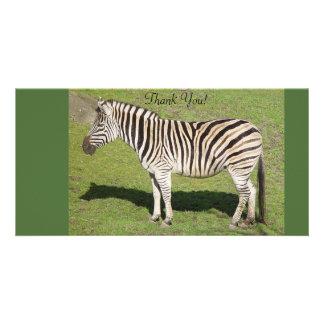 A zebra está no perfil, molda a sombra cartões com fotos personalizados