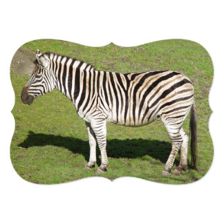 A zebra está no perfil, molda a sombra convite 12.7 x 17.78cm