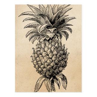 Abacaxis da ilustração do abacaxi dos 1800s do cartão postal