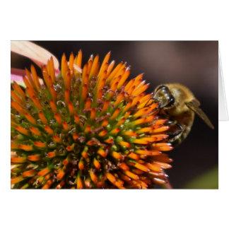 Abelha do mel no cartão de Coneflower