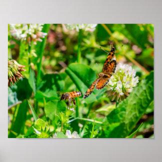 Abelha e borboleta poster