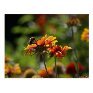 Abelha e cartão vermelho das flores da laranja