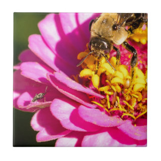 abelha e inseto que estão em uma flor roxa