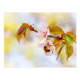 Abelha em uma flor da cereja cartão postal