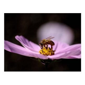 Abelha na flor cartão postal
