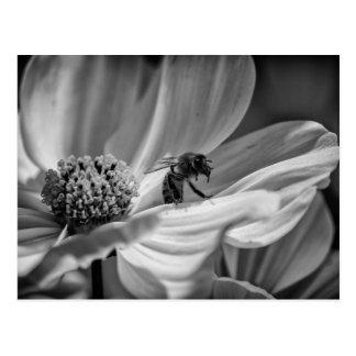 Abelha na flor de Cosmo - cartão
