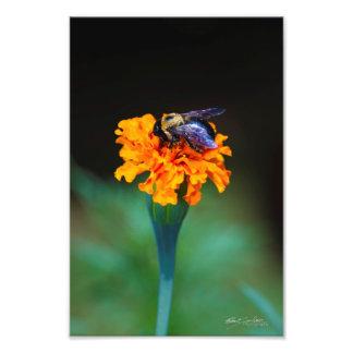 abelha ocupada 2 arte de fotos