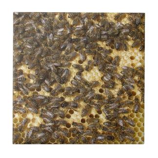 Abelhas do mel em toda parte