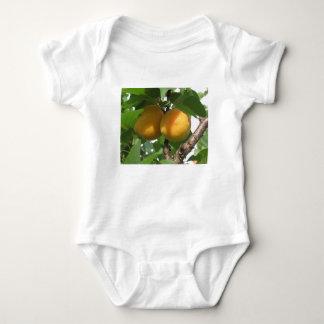 Abricós maduros que penduram na árvore. Toscânia, Body Para Bebê