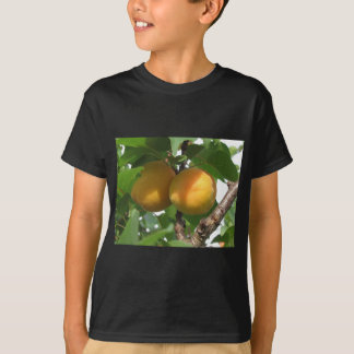 Abricós maduros que penduram na árvore. Toscânia, Camiseta