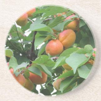 Abricós maduros que penduram na árvore. Toscânia, Porta Copos De Arenito