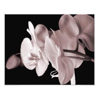 Abstrato branco do fundo do preto da flor da impressão de foto