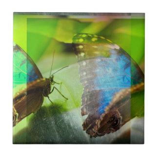 Abstrato das borboletas azulejos
