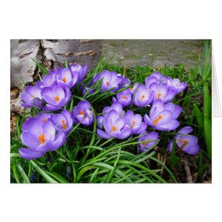 Açafrões do primavera cartão