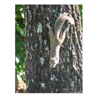 Acima de uma árvore! cartão