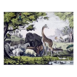 Adam nomeia os animais cartão do vintage cartão postal