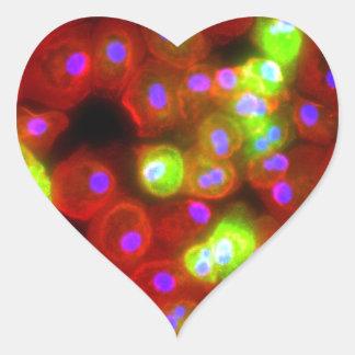 Adesivo Coração Arte da ciência das pilhas do macrófago