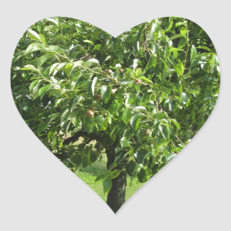 Adesivo Coração Árvore de pera com folhas do verde e frutas