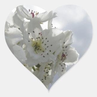 Adesivo Coração Árvore de pera de florescência contra o céu