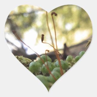 Adesivo Coração Benevolência Mossy