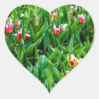Adesivo Coração Campo com as tulipas cor-de-rosa e amarelas