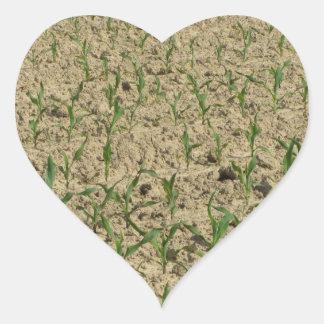 Adesivo Coração Campo do milho do milho verde na fase inicial