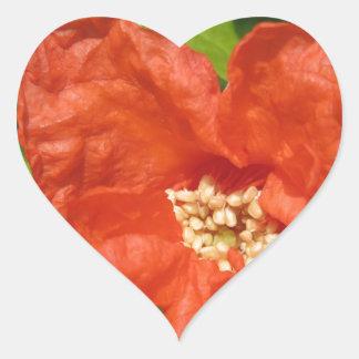 Adesivo Coração Close up da flor vermelha da romã