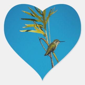 Adesivo Coração Colibri fêmea da rubi-garganta na árvore