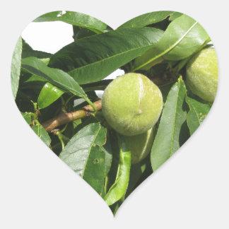 Adesivo Coração Dois pêssegos verdes unripe que penduram em uma