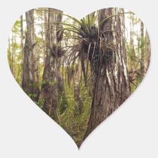 Adesivo Coração Epiphyte Bromeliad na floresta de Florida