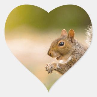 Adesivo Coração Esquilo com fome