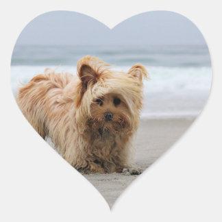Adesivo Coração Farris - Lucy - raça misturada