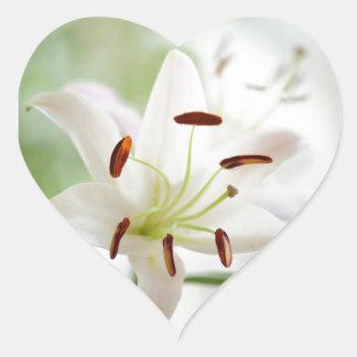 Adesivo Coração Flor do lírio branco inteiramente aberta