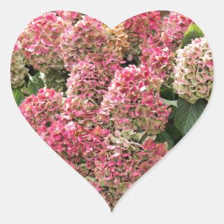 Adesivo Coração Flores de um hydrangea do francês (macrophyl do